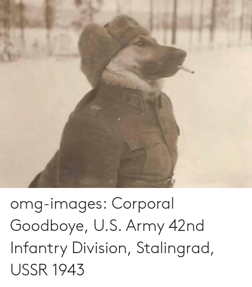 corporal: omg-images:  Corporal Goodboye, U.S. Army 42nd Infantry Division, Stalingrad, USSR 1943