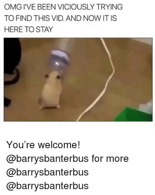 Memes, Omg, and Been: OMG I'VE BEEN VICIOUSLY TRYING  TO FIND THIS VID. AND NOW IT IS  HERE TO STAY You're welcome! @barrysbanterbus for more @barrysbanterbus @barrysbanterbus