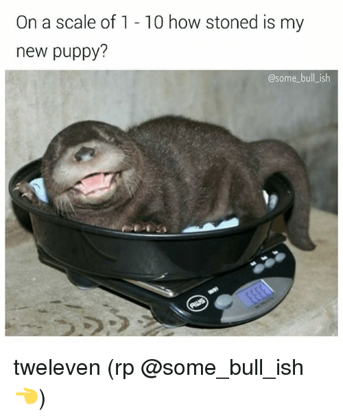 Scaling: On a scale of 1 - 10 how stoned is my  new puppy?  @some bull_ish tweleven (rp @some_bull_ish 👈)