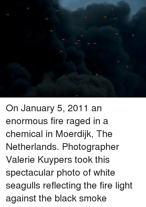 Fire, Black, and Netherlands