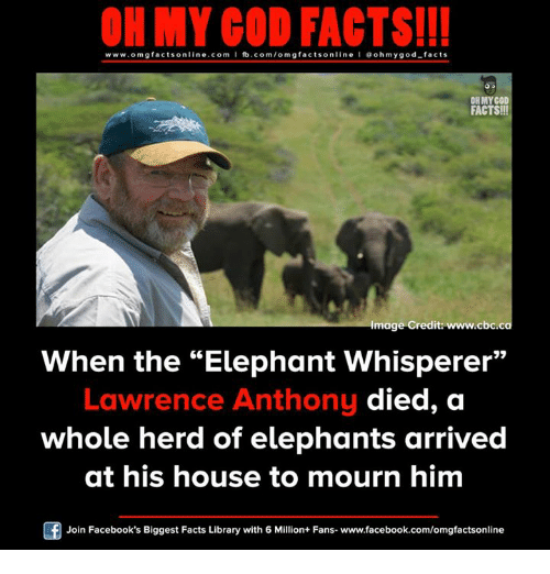 """Facebook, Facts, and God: ON MY GOD FACTS!!!  www.omg facts online.com I fb.com/omg facts online I Goh my god-facts  OH MY GOD  FACTS!!!  Image Credit: www.cbc.ca  When the Elephant Whisperer""""  Lawrence Anthony  died, a  whole herd of elephants arrived  at his house to mourn him  Join Facebook's Biggest Facts Library with 6 Million+ Fans- www.facebook.com/omgfactsonline"""