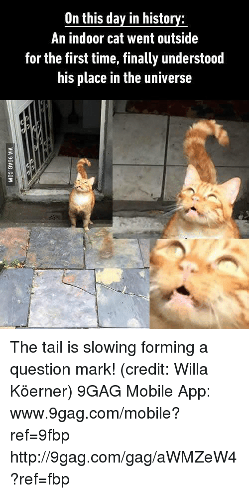 Question Marks: On this day in history:  An indoor cat went outside  for the first time, finally understood  his place in the universe The tail is slowing forming a question mark! (credit: Willa Köerner) 9GAG Mobile App: www.9gag.com/mobile?ref=9fbp  http://9gag.com/gag/aWMZeW4?ref=fbp