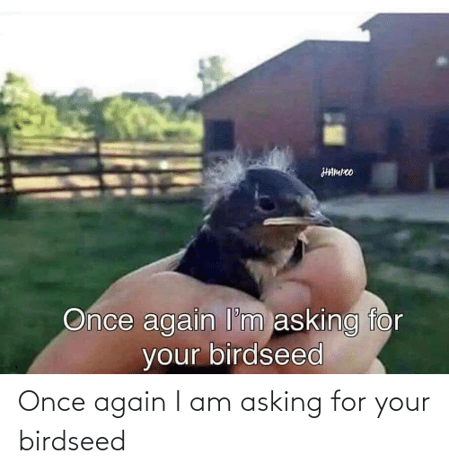Asking: Once again I am asking for your birdseed