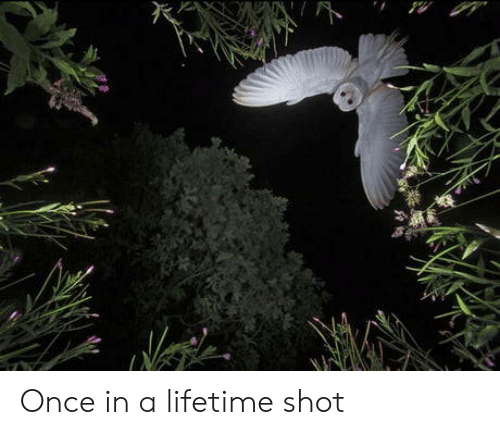 Once In A Lifetime: Once in a lifetime shot