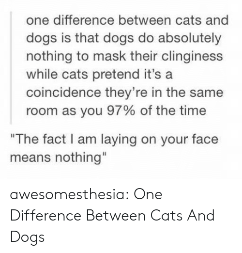 "Cats, Dogs, and Tumblr: one difference between cats and  dogs is that dogs do absolutely  nothing to mask their clinginess  while cats pretend it's a  coincidence they're in the same  room as you 97% of the time  ""The fact I am laying on your face  means nothing"" awesomesthesia:  One Difference Between Cats And Dogs"
