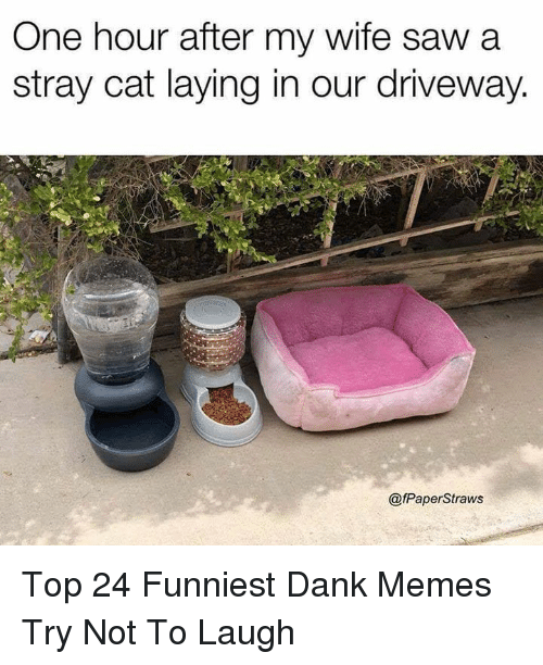 try not to laugh: One hour after my wife saw a  stray cat laying in our driveway.  @fPaperStraws Top 24 Funniest Dank Memes Try Not To Laugh
