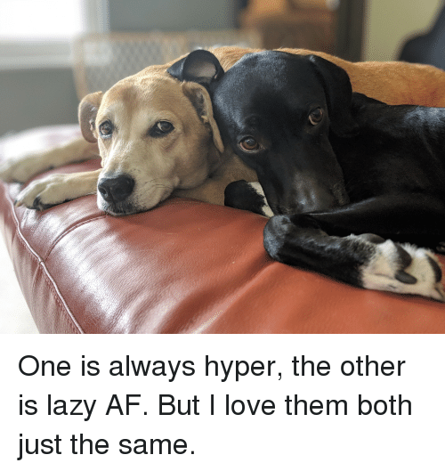 hyper: One is always hyper, the other is lazy AF. But I love them both just the same.