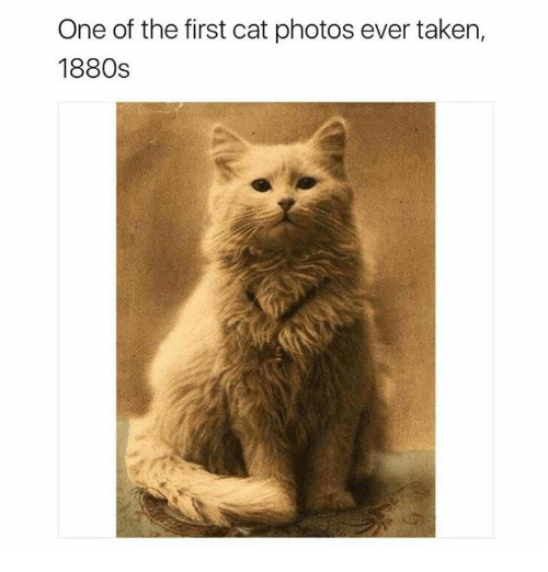Taken, Cat, and Photos: One of the first cat photos ever taken,  1880s