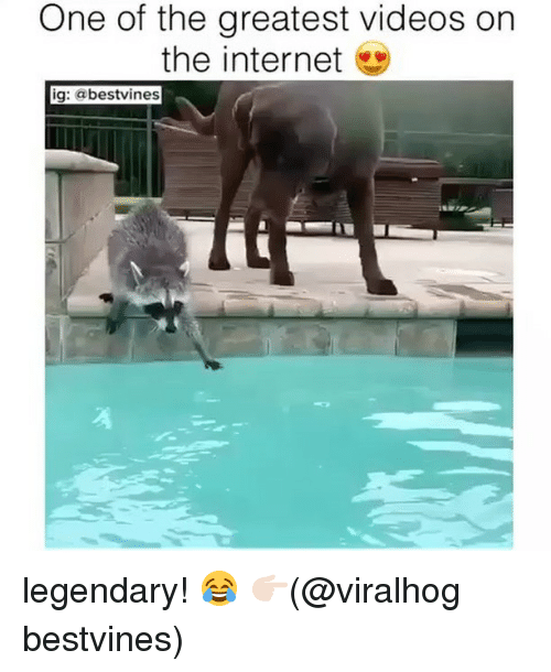 Internet, Memes, and Videos: One of the greatest videos on  the internet  ig: @bestvines legendary! 😂 👉🏻(@viralhog bestvines)