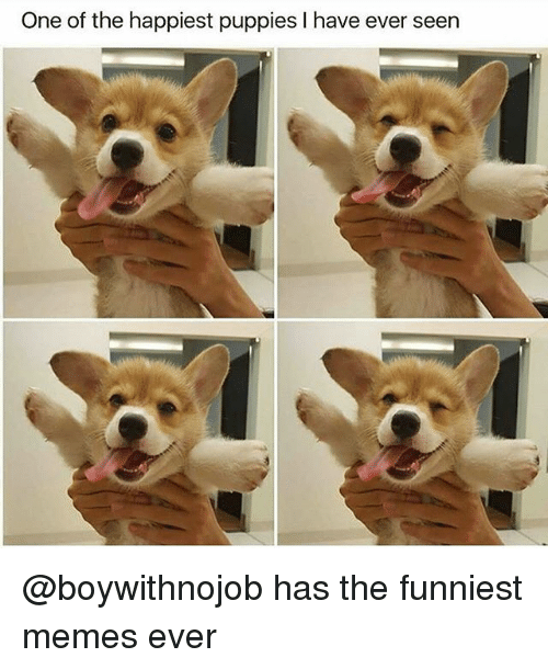 Funniest Memes Ever: One of the happiest puppies I have ever seen @boywithnojob has the funniest memes ever