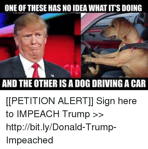 Sign Here: ONE OF THESE HAS NO IDEA WHAT IT'S DOING  AND THE OTHER IS A DOG DRIVING A CAR [[PETITION ALERT]] Sign here to IMPEACH Trump >> http://bit.ly/Donald-Trump-Impeached