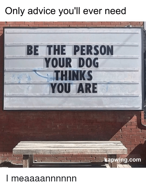 Advice, Dog, and Com: Only advice vou'll ever need  BE THE PERSON  YOUR DOG  THINKS  YOU ARE  kapwing.com I meaaaannnnnn
