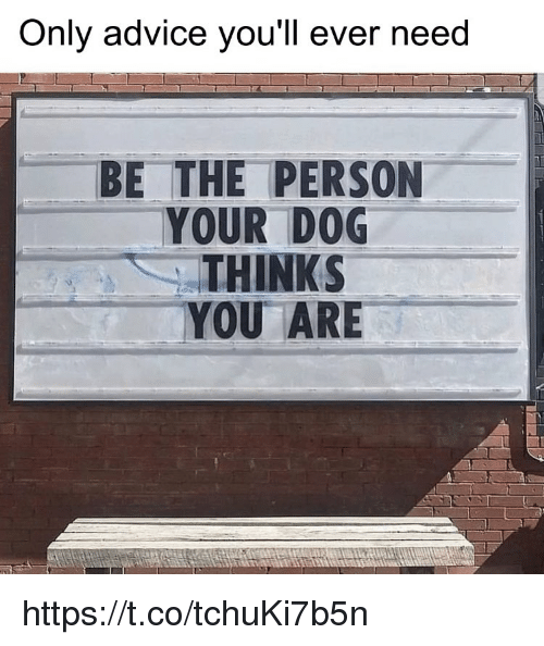 Advice, Memes, and 🤖: Only advice you'll ever need  BE THE PERSON  YOUR DOG  THINKS  YOU ARE https://t.co/tchuKi7b5n