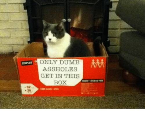 Assholism: ONLY DUMB  MM  STAPLES ASSHOLES  GET IN THIS  BOX  20