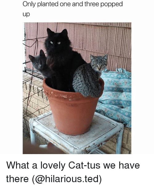 Funny, Ted, and Hilarious: Only planted one and three popped  up What a lovely Cat-tus we have there (@hilarious.ted)
