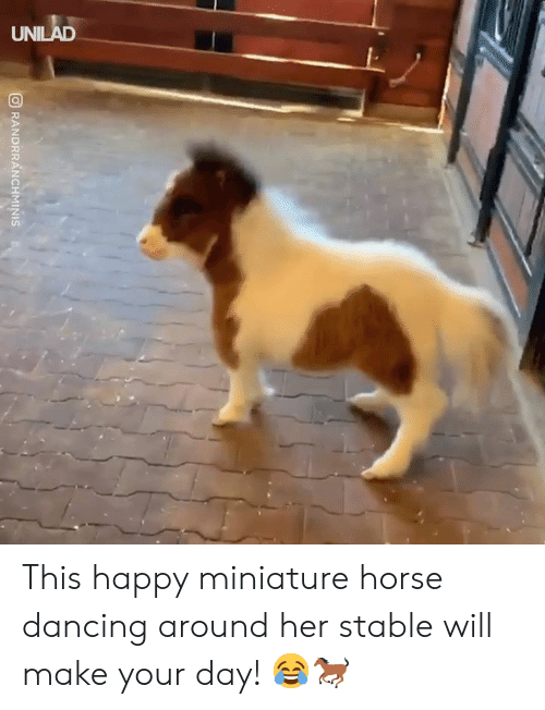 Dancing, Dank, and Happy: ORANDRRANCHMINIS This happy miniature horse dancing around her stable will make your day! 😂🐎