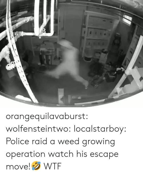 Police, Tumblr, and Weed: orangequilavaburst:  wolfensteintwo:  localstarboy:  Police raid a weed growing operation watch his escape move!🤣   WTF