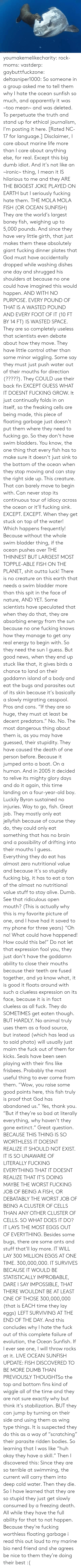 "Outta: ORihad Herrma M  S youmakemelikecharity:  rock-moms:  vastderp:  gaybuttfuckzone:  deltasniper1000:  So someone in a group asked me to tell them why I hate the ocean sunfish so much, and apparently it was ~too mean~ and was deleted. To perpetuate the truth and stand up for ethical journalism, I'm posting it here. [Rated NC-17 for language.]  Disclaimer, I care about marine life more than I care about anything else, for real. Except this big dumb idiot. And it's not like an ~ironic~ thing, I mean it IS hilarious to me and they ARE THE BIGGEST JOKE PLAYED ON EARTH but I seriously fucking hate them.  THE MOLA MOLA FISH (OR OCEAN SUNFISH)  They are the world's largest boney fish, weighing up to 5,000 pounds. And since they have very little girth, that just makes them these absolutely giant fucking dinner plates that God must have accidentally dropped while washing dishes one day and shrugged his shoulders at because no one could have imagined this would happen. AND WITH NO PURPOSE. EVERY POUND OF THAT IS A WASTED POUND AND EVERY FOOT OF IT (10 FT BY 14 FT) IS WASTED SPACE.  They are so completely useless that scientists even debate about how they move. They have little control other than some minor wiggling. Some say they must just push water out of their mouths for direction (?????). They COULD use their back fin EXCEPT GUESS WHAT IT DOESNT FUCKING GROW. It just continually folds in on itself, so the freaking cells are being made, this piece of floating garbage just doesn't put them where they need to fucking go.   So they don't have swim bladders. You know, the one thing that every fish has to make sure it doesn't just sink to the bottom of the ocean when they stop moving and can stay the right side up. This creature. That can barely move to begin with. Can never stop its continuous tour of idiocy across the ocean or it'll fucking sink. EXCEPT. EXCEPT. When they get stuck on top of the water! Which happens frequently! Because without the whole swim bladder thing, if the ocean pushes over THE THINNEST BUT LARGEST MOST TOPPLE-ABLE FISH ON THE PLANET, shit outta luck! There is no creature on this earth that needs a swim bladder more than this spit in the face of nature, AND YET. Some scientists have speculated that when they do that, they are absorbing energy from the sun because no one fucking knows how they manage to get any real energy to begin with. So they need the sun I guess. But good news, when they end up stuck like that, it gives birds a chance to land on their goddamn island of a body and eat the bugs and parasites out of its skin because it's basically a slowly migrating cesspool. Pros and cons.   ""If they are so huge, they must at least be decent predators."" No. No. The most dangerous thing about them is, as you may have guessed, their stupidity. They have caused the death of one person before. Because it jumped onto a boat. On a human. And in 2005 it decided to relive its mighty glory days and do it again, this time landing on a four-year-old boy. Luckily Byron sustained no injuries. Way to go, fish. Great job.  They mostly only eat jellyfish because of course they do, they could only eat something that has no brain and a possibility of drifting into their mouths I guess. Everything they do eat has almost zero nutritional value and because it's so stupidly fucking big, it has to eat a ton of the almost no nutritional value stuff to stay alive. Dumb. See that ridiculous open mouth? (This is actually why this is my favorite picture of one, and I have had it saved to my phone for three years) ""Oh no! What could have happened! How could this be!"" Do not let that expression fool you, they just don't have the goddamn ability to close their mouths because their teeth are fused together, and ya know what, it is good it floats around with such a clueless expression on its face, because it is in fact clueless as all fuck.  They do SOMETIMES get eaten though. BUT HARDLY. No animal truly uses them as a food source, but instead (which has lead us to said photo) will usually just maim the fuck out of them for kicks. Seals have been seen playing with their fins like frisbees. Probably the most useful thing to ever come from them.   ""Wow, you raise some good points here, this fish truly is proof that God has abandoned us."" Yes, thank you. ""But if they're so bad at literally everything, why haven't they gone extinct."" Great question.   BECAUSE THIS THING IS SO WORTHLESS IT DOESNT REALIZE IT SHOULD NOT EXIST. IT IS SO UNAWARE OF LITERALLY FUCKING EVERYTHING THAT IT DOESNT REALIZE THAT IT'S DOING MAYBE THE WORST FUCKING JOB OF BEING A FISH, OR DEBATABLY THE WORST JOB OF BEING A CLUSTER OF CELLS THAN ANY OTHER CLUSTER OF CELLS. SO WHAT DOES IT DO? IT LAYS THE MOST EGGS OUT OF EVERYTHING. Besides some bugs, there are some ants and stuff that'll lay more. IT WILL LAY 300 MILLION EGGS AT ONE TIME. 300,000,000. IT SURVIVES BECAUSE IT WOULD BE STATISTICALLY IMPROBABLE, DARE I SAY IMPOSSIBLE, THAT THERE WOULDNT BE AT LEAST ONE OF THOSE 300,000,000 (that is EACH time they lay eggs) LEFT SURVIVING AT THE END OF THE DAY.   And this concludes why I hate the fuck out of this complete failure of evolution, the Ocean Sunfish. If I ever see one, I will throw rocks at it.   LIVE OCEAN SUNFISH UPDATE: FISH DISCOVERED TO BE MORE DUMB THAN PREVIOUSLY THOUGHTSo  the top and bottom fins kind of wiggle all of the time and they are not  sure exactly why but think it's stabilization. BUT they can jump by  turning on their side and using them as  wing type things. It is suspected they do this as a way of ""scratching""  their parasite ridden bodies. So learning that I was like ""huh okay they  have a skill."" Then I discovered this: Since they  are so terrible at swimming, the current will carry them into deep cold  water. Then they die. So I have learned that they are so stupid they  just get slowly consumed by a freezing death. All while they have the  full ability for that to not happen. Because they're fucking worthless  floating garbage    i read this out loud to my marine bio nerd friend and she agrees   be nice to them they're doing their best :("