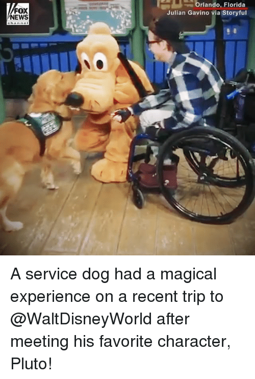Favorite Character: Orlando,  Florida  FOX  NEWS  Julian Gavino via Storyful A service dog had a magical experience on a recent trip to @WaltDisneyWorld after meeting his favorite character, Pluto!