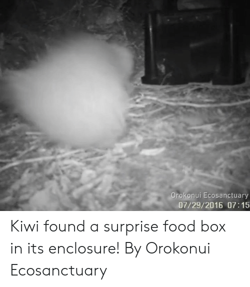 Dank, Food, and 🤖: Orokonui Ecosanctuary  07/29/2016 07:15 Kiwi found a surprise food box in its enclosure!  By Orokonui Ecosanctuary