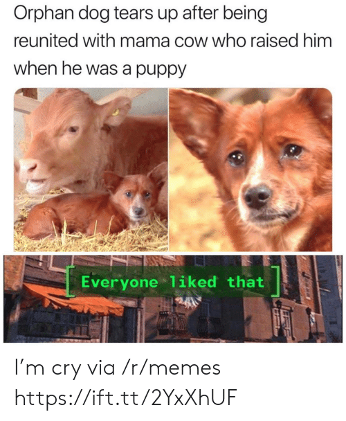 Memes, Puppy, and Dog: Orphan dog tears up after being  reunited with mama cow who raised him  when he was a puppy  Everyone 1iked that I'm cry via /r/memes https://ift.tt/2YxXhUF