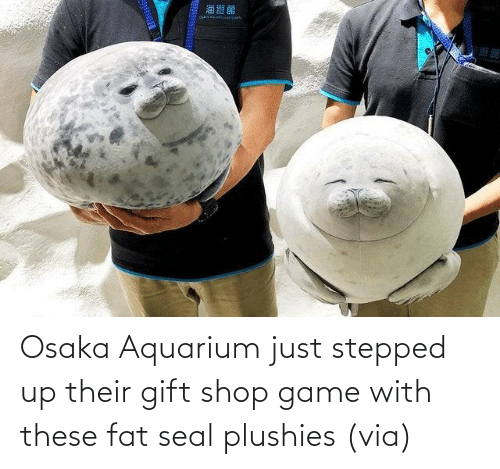 Seal: Osaka Aquarium just stepped up their gift shop game with these fat seal plushies (via)