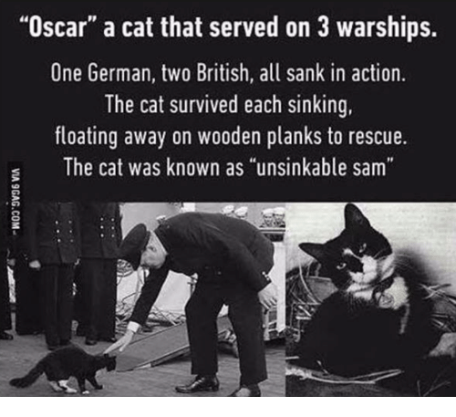 "sinking: ""Oscar"" a cat that served on 3 warships.  One German, two British, all sank in action.  The cat survived each sinking,  floating away on wooden planks to rescue.  The cat was known as ""unsinkable sam"""