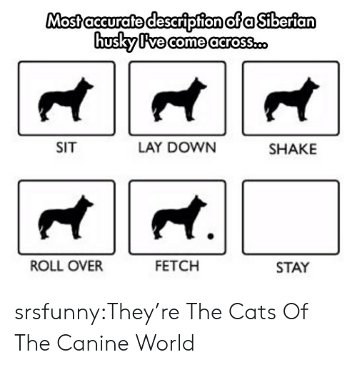 Cats, Tumblr, and Blog: osfaccurafe descripfion ofa Siberian  US  SIT  LAY DOWN  SHAKE  ROLL OVER  FETCH  STAY srsfunny:They're The Cats Of The Canine World