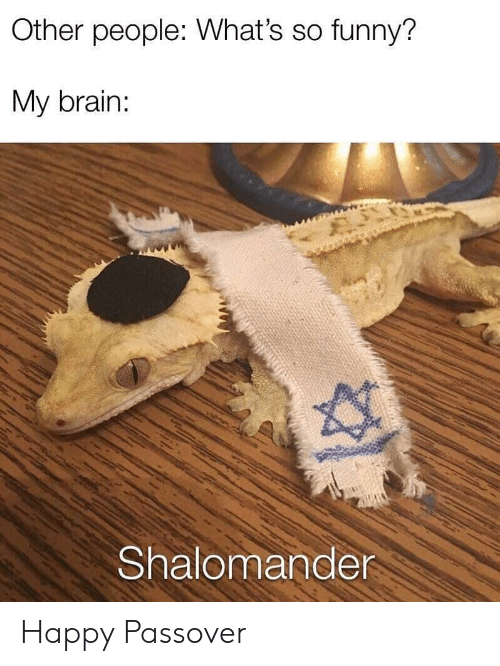 Funny, Brain, and Happy: Other people: What's so funny?  My brain:  Shalomande Happy Passover