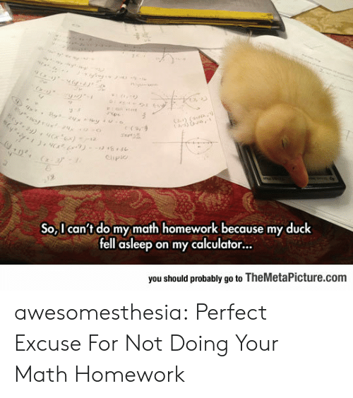 themetapicture: otrux24  Cay (  e (s,9  Clipio  2  So,I can't do my math homework because my duck  fell asleep on my calculator...  you should probably go to TheMetaPicture.com awesomesthesia:  Perfect Excuse For Not Doing Your Math Homework