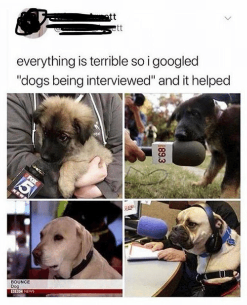 "bounce: ott  everything is terrible so i googled  ""dogs being interviewed"" and it helped  BOUNCE  Dog  DOG NEWS  89.3"