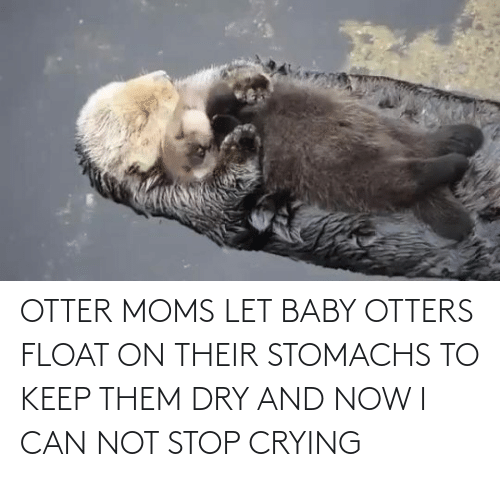 i can: OTTER MOMS LET BABY OTTERS FLOAT ON THEIR STOMACHS TO KEEP THEM DRY AND NOW I CAN NOT STOP CRYING