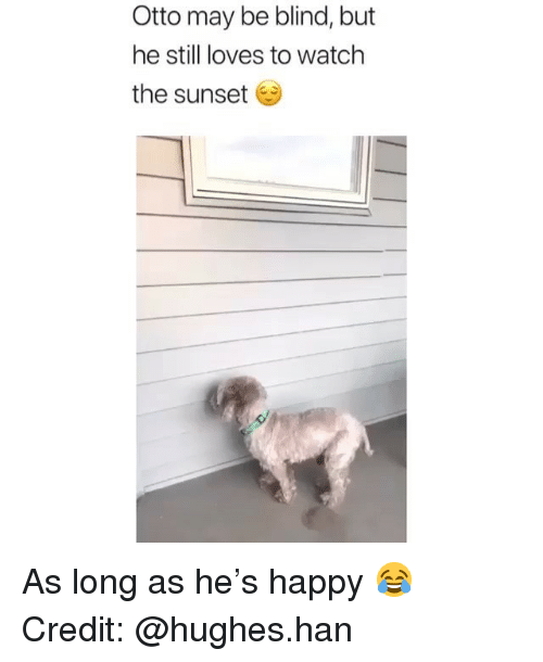Memes, Happy, and Sunset: Otto may be blind, but  he still loves to watch  the sunset As long as he's happy 😂 Credit: @hughes.han