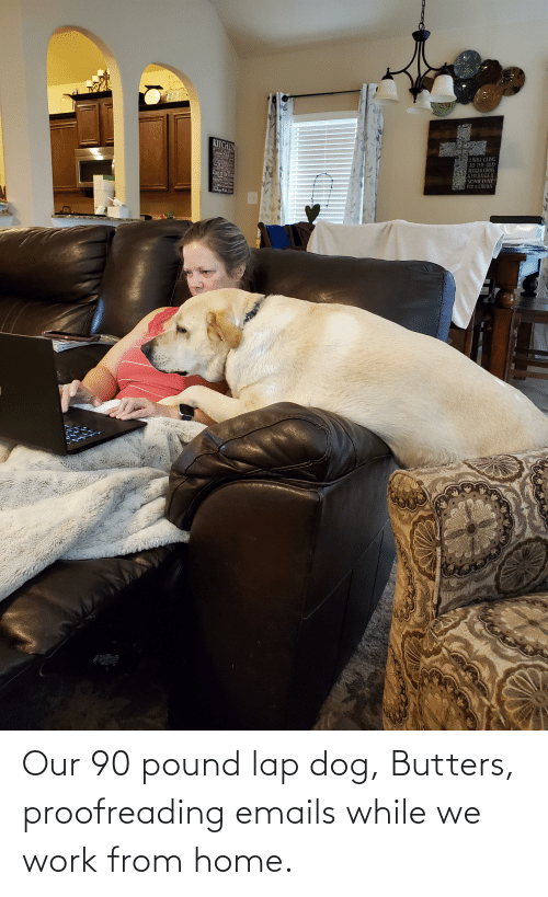 Emails: Our 90 pound lap dog, Butters, proofreading emails while we work from home.