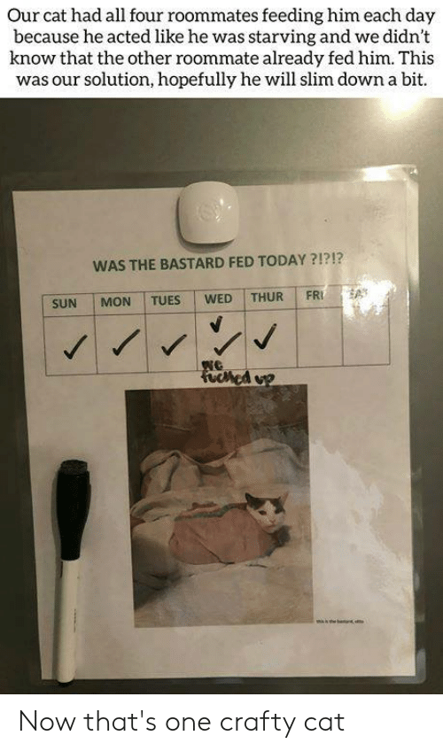 Memes, Roommate, and Today: Our cat had all four roommates feeding him each day  because he acted like he was starving and we didn't  know that the other roommate already fed him. This  was our solution, hopefully he will slim down a bit.  WAS THE BASTARD FED TODAY?!?!?  FRI  THUR  WED  TUES  MON  SUN  Fuched op Now that's one crafty cat