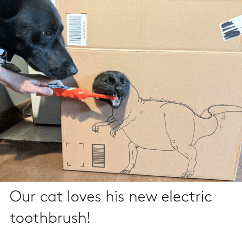 Electric: Our cat loves his new electric toothbrush!