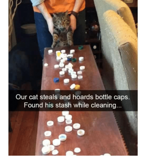 bottle cap: Our cat steals and hoards bottle caps.  Found his stash while cleaning.