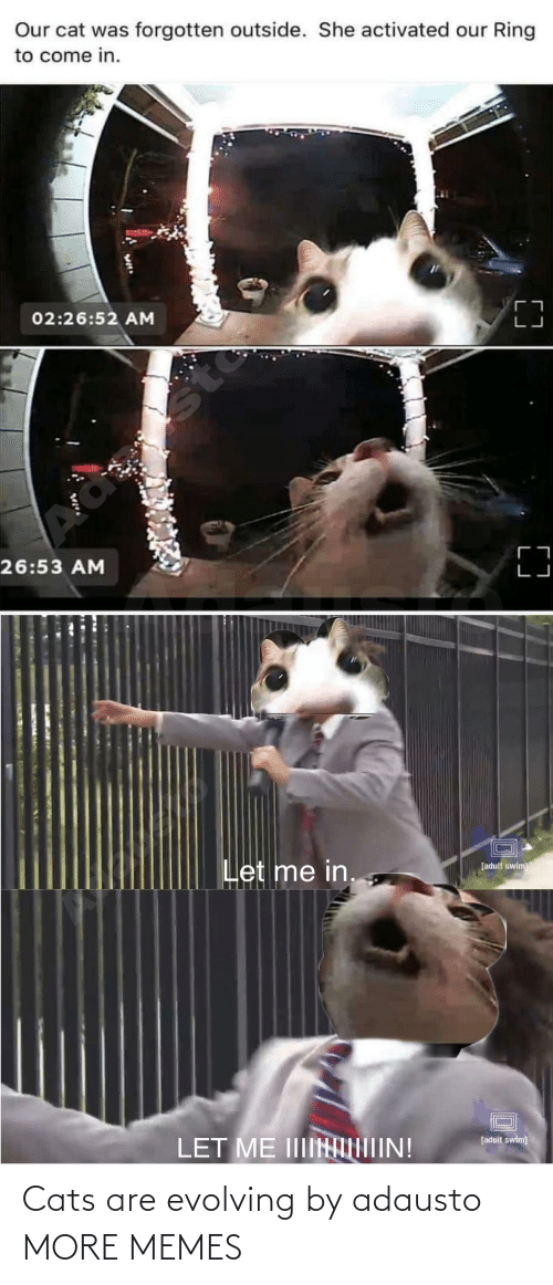 Come In: Our cat was forgotten outside. She activated our Ring  to come in.  02:26:52 AM  sto  26:53 AM  Let me in.  [adult swim  LET ME IIIINIIN!  [adult swim) Cats are evolving by adausto MORE MEMES