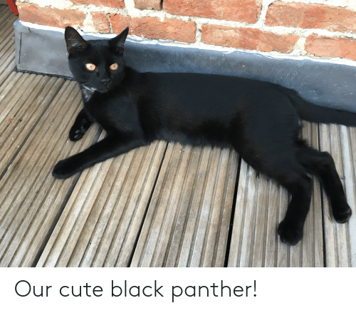 Black Panther: Our cute black panther!