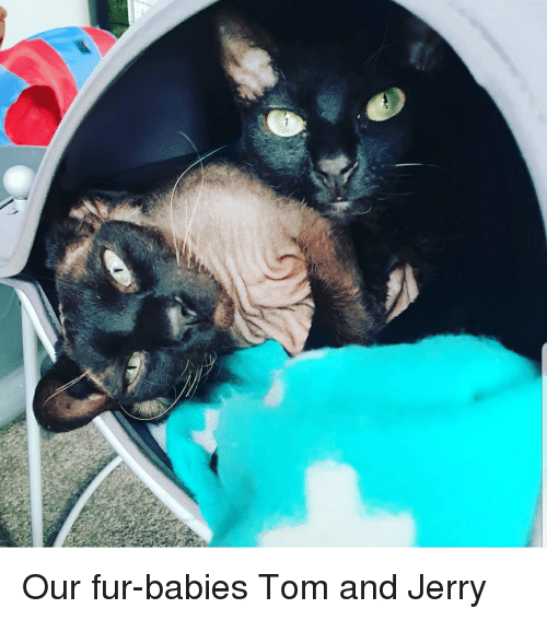 Tom and Jerry and Tom and Jerry Meme on astrologymemes com