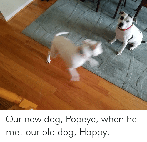 Popeye: Our new dog, Popeye, when he met our old dog, Happy.
