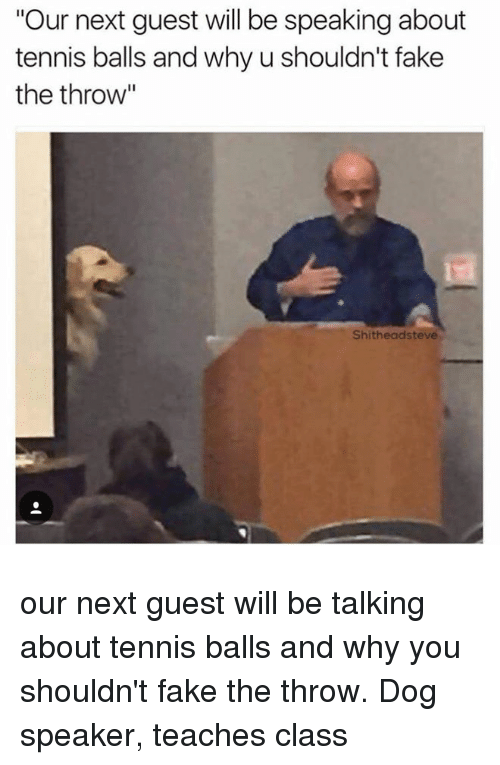 """tennis balls: """"Our next guest will be speaking about  tennis balls and why u shouldn't fake  the throw""""  Shitheadsteve our next guest will be talking about tennis balls and why you shouldn't fake the throw. Dog speaker, teaches class"""