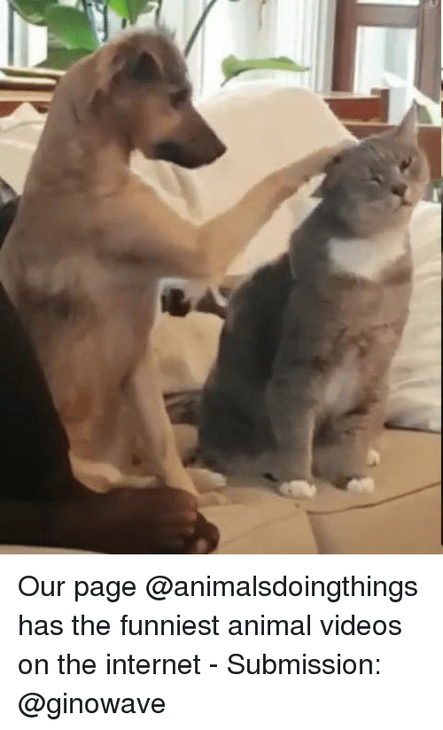 Internet, Videos, and Animal: Our page @animalsdoingthings has the funniest animal videos on the internet - Submission: @ginowave
