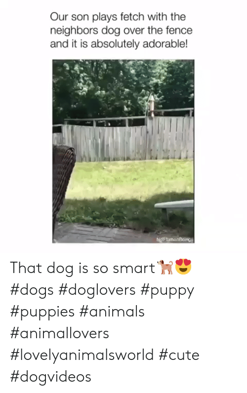 fetch: Our son plays fetch with the  neighbors dog over the fence  and it is absolutely adorable!  NgthumanBcings That dog is so smart🐕😍 #dogs #doglovers #puppy #puppies #animals #animallovers #lovelyanimalsworld #cute #dogvideos