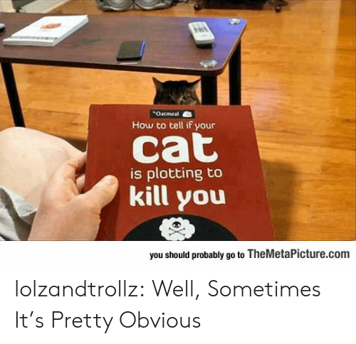 Tumblr, Blog, and How To: Outmeal  How to tell if your  cat  is plotting to  kill you  you should probably go to TheMetaPicture.com lolzandtrollz:  Well, Sometimes It's Pretty Obvious