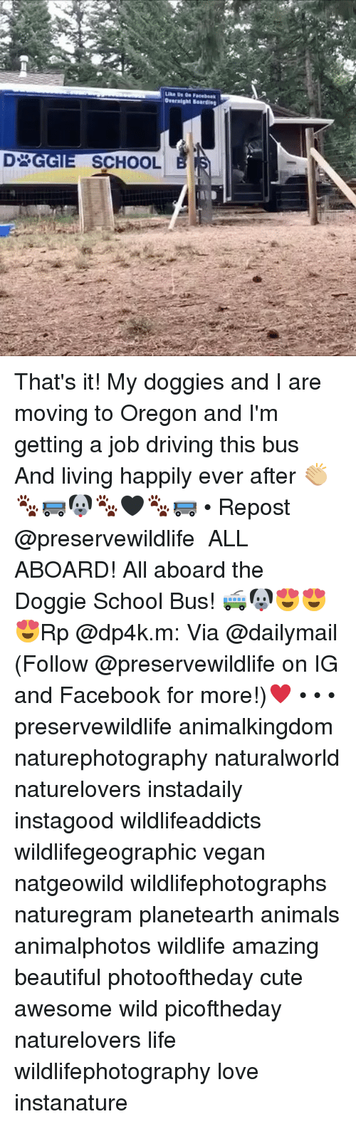 Getting A Job: Overnight Boardieg  SCHOOL That's it! My doggies and I are moving to Oregon and I'm getting a job driving this bus And living happily ever after 👏🏼🐾🚌🐶🐾🖤🐾🚌 • Repost @preservewildlife ・・・ ALL ABOARD! All aboard the Doggie School Bus! 🚎🐶😍😍😍Rp @dp4k.m: Via @dailymail (Follow @preservewildlife on IG and Facebook for more!)♥️ • • • preservewildlife animalkingdom naturephotography naturalworld naturelovers instadaily instagood wildlifeaddicts wildlifegeographic vegan natgeowild wildlifephotographs naturegram planetearth animals animalphotos wildlife amazing beautiful photooftheday cute awesome wild picoftheday naturelovers life wildlifephotography love instanature