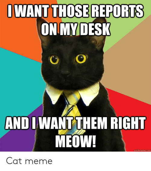 quickmeme: OWANT THOSEREPORTS  ON MY DESK  AND I WANT THEM RIGHT  MEOW!  quickmeme.com Cat meme
