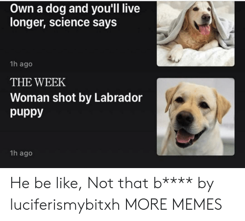 Be Like, Dank, and Memes: Own a dog and you'll live  longer, science says  1h ago  THE WEEK  Woman shot by Labrador  1h ago He be like, Not that b**** by luciferismybitxh MORE MEMES
