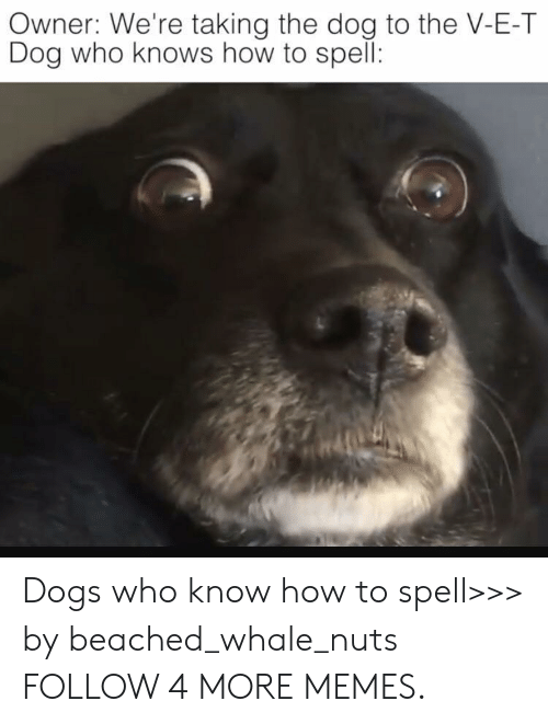 beached: Owner: We're taking the dog to the V-E-T  Dog who knows how to spell: Dogs who know how to spell>>> by beached_whale_nuts FOLLOW 4 MORE MEMES.