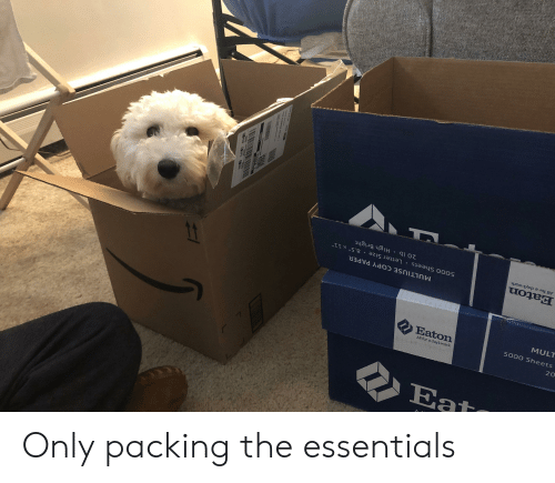 """saas: oz  saas ooos  MULTIUSE COPY PAPER  Eaton  5000 Sheets Letter Size 8.5"""" x 11""""  All for a day's work  20 lb High Bright Only packing the essentials"""